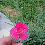 Gardening 2012 - 115_2084.JPG