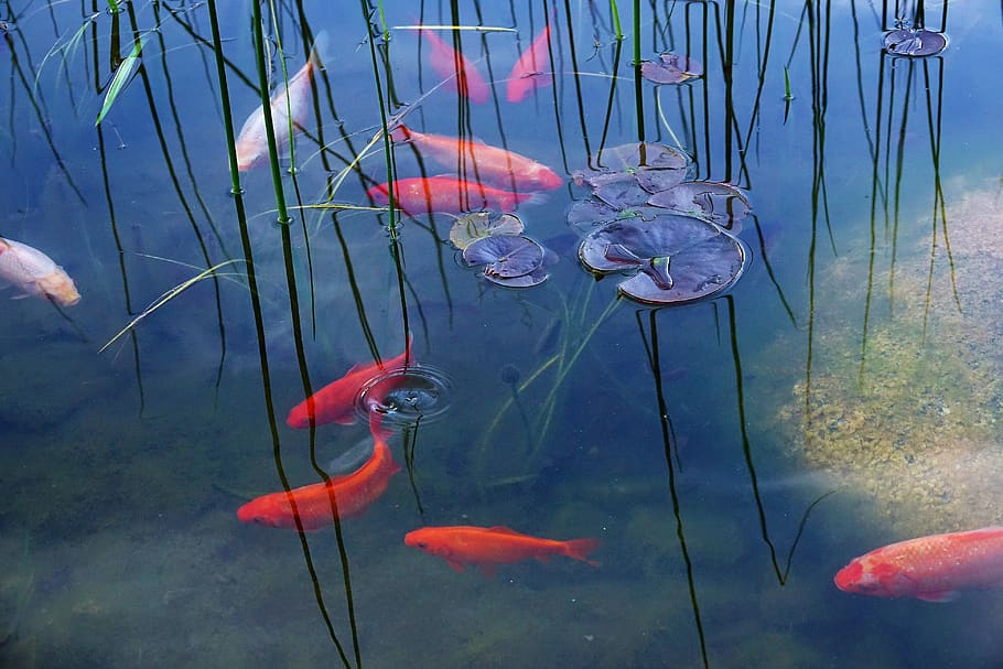 How to catch fish in a garden pond