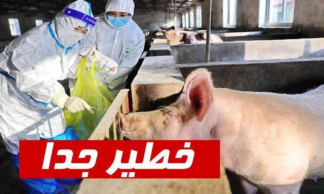 أعلنت الصين، اليوم السبت 6 مارس 2021، تفشي مرض جديد في إقليمي سيشوان وخبي.وأوضحت ان حمى الخنازير الإفريقية تتفشى في إقليمي سيشوان وخبي المنتجين الرئيسيين للحوم الخنازير في البلاد.   يجدر الإشارة إلى أن الصين تعد أكبر منتج ومستهلك للحوم الخنازير في العالم، وقضى تفشي مرض حمى الخنازير الإفريقية على نحو نصف ثروة البلاد من الخنازير في 2019.