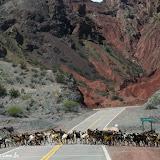 Quebradaa de Las Conchas - Ruta 40 rumo a Cafayate, Argentina