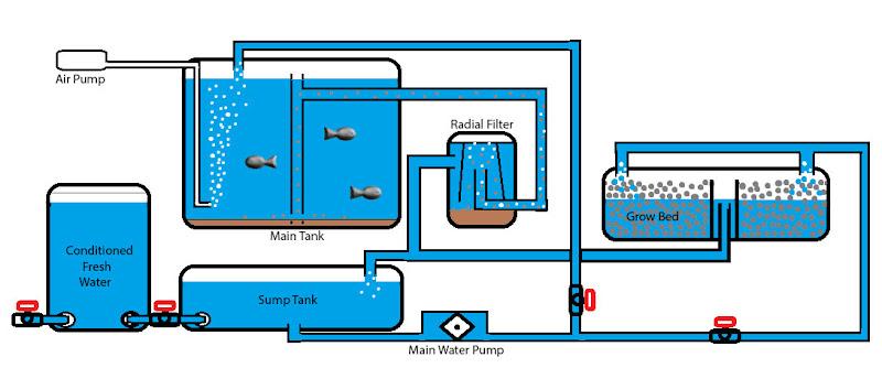 Backyard Aquaponics • View topic - Southern California IBC ...