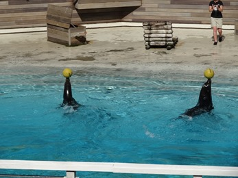 2017.06.17-049 spectacle d'otaries