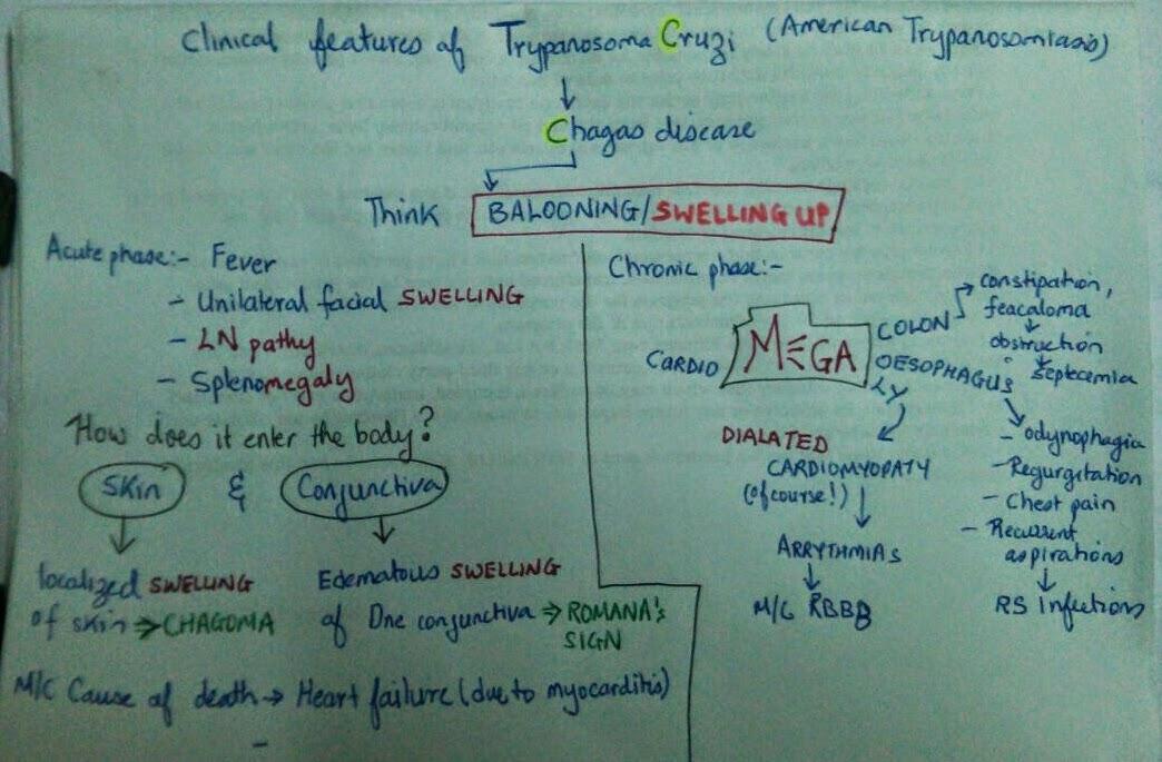 trypanosoma cruzi usmle