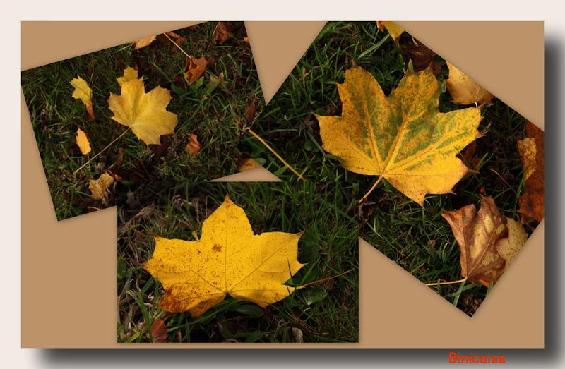 Les feuilles jonchent le sol .... dans Fleurs et plantes 2011%25252011