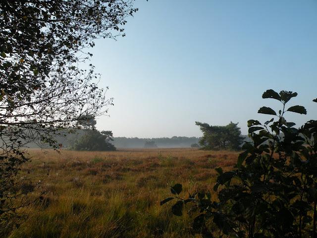 Marche Kennedy (80km) de Haaksbergen(NL): 16-17/09/2011 DSCN2860