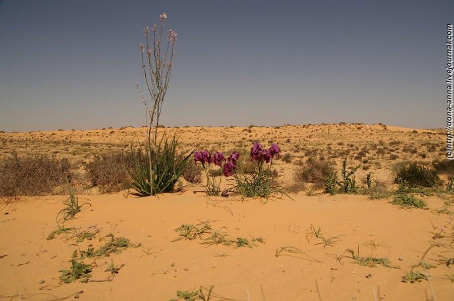 фотошопе растения полупустынь картинки небольшой процент