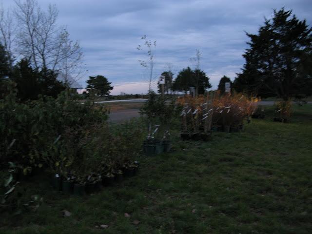 Hammo Planting - Shannon Schiesser - IMG_4874.JPG