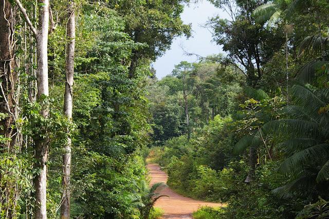 La forêt près de la Rivière Comté. 24 novembre 2011. Photo : J.-M. Gayman