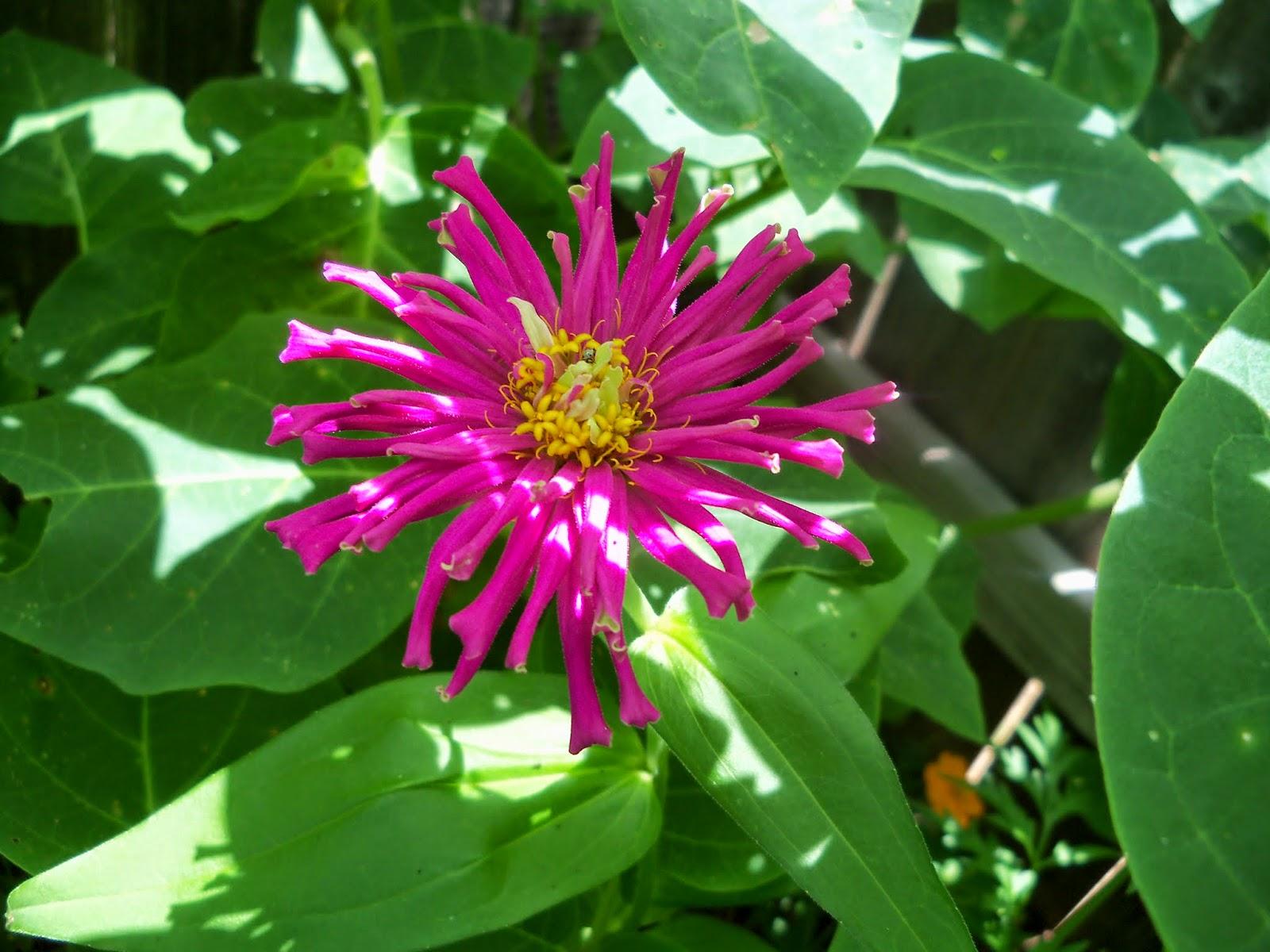 Gardening 2014 - 116_2979.JPG
