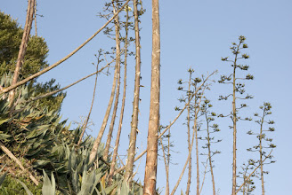 Photo: Tall plants around the outer walkway of the island