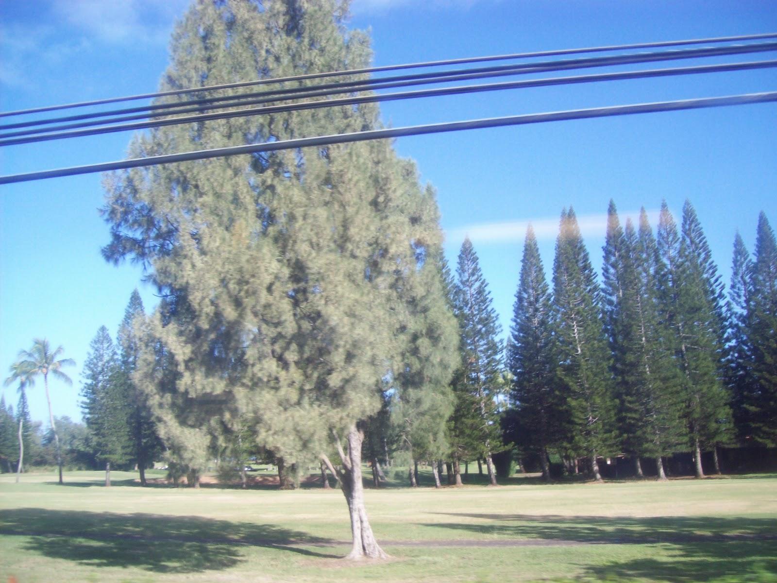 Hawaii Day 3 - 100_6949.JPG