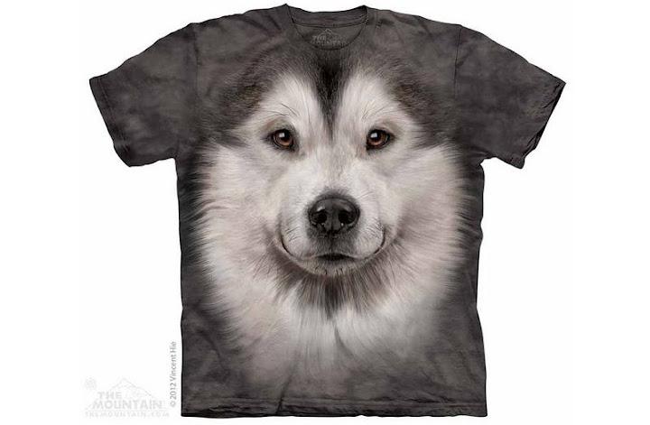 Hình ảnh chó Alaska đẹp nhất thế giới