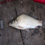 20140801_Fishing_Bochanytsia_012.jpg