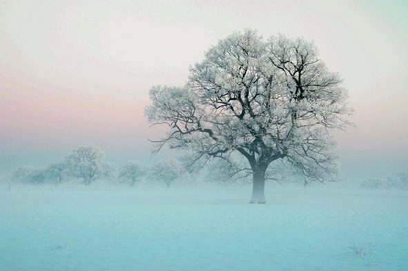 Lonely_Tree