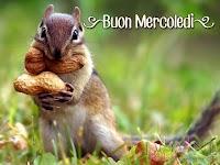 buon mercoledi immagine con frase aforismo scoiattolo arachidi.jpg