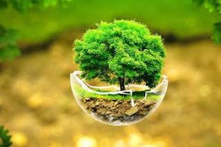 આંતરરાષ્ટ્રીય વનસ્પતિ આરોગ્ય વર્ષ -2020