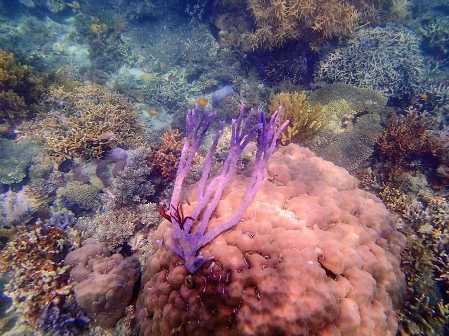 Coral Reef, Chindonan Island, Palawan. Philippines.