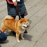 2014 Japan - Dag 11 - jordi-DSC_0915.JPG