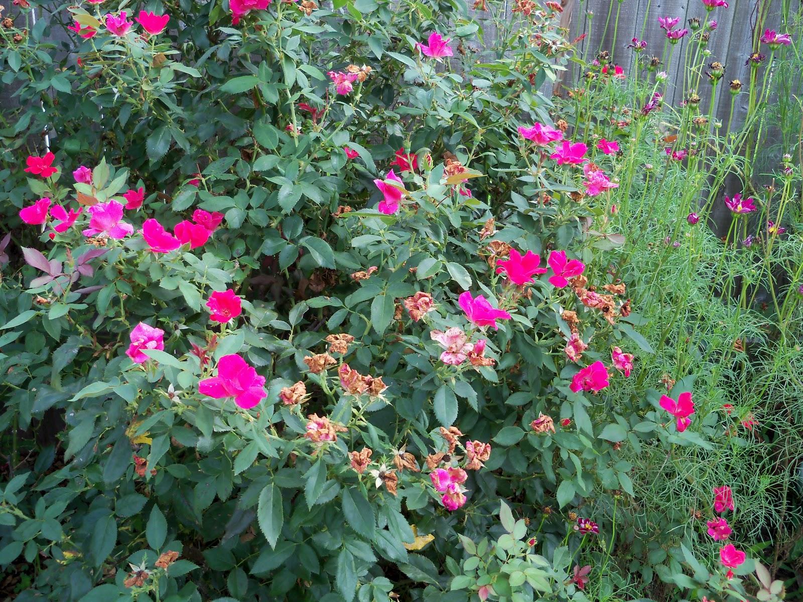 Gardening 2010, Part Three - 101_5219.JPG