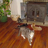 Grace, Tess, and Tink in front of the woodburner.