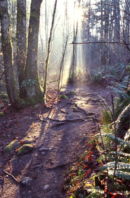 Whatcom Falls Park has great trails for nature walks and off-road biking.Credit: Jon Brunk