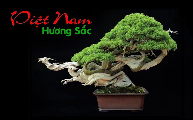Dien dan cay canh Viet Nam