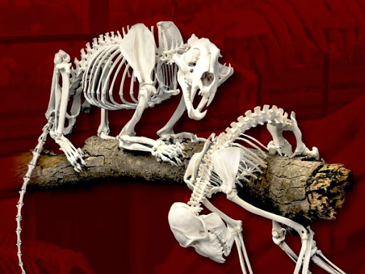 SKELETONS Coming to International Drive in Orlando