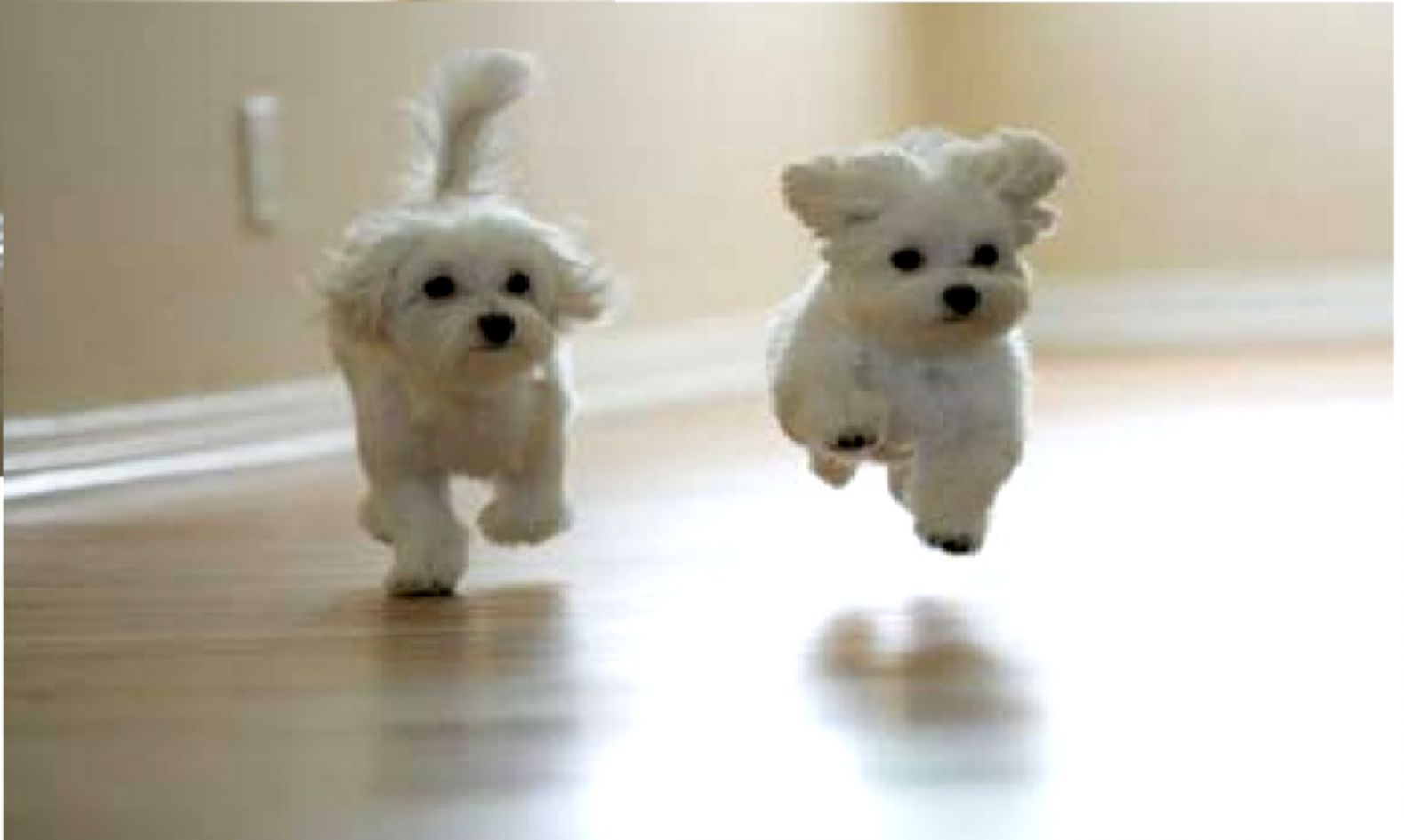 Dogs Jumping Wallpaper Hd Wallpapers Gallery