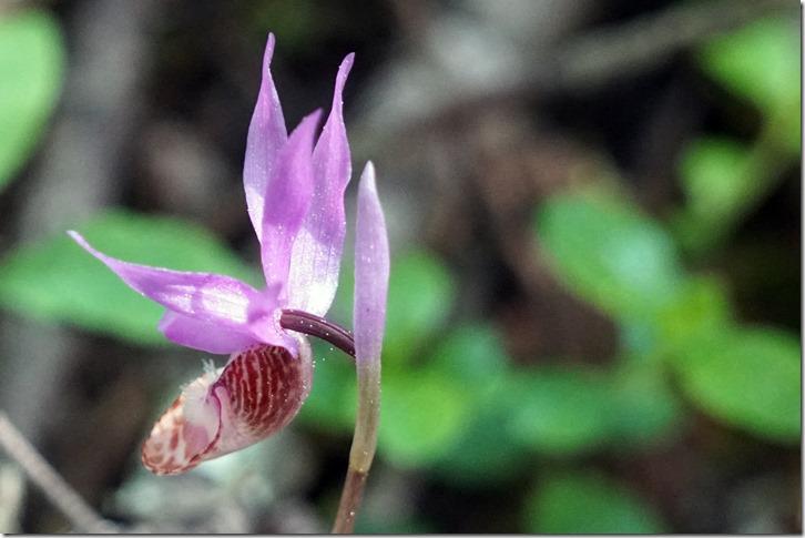 lopez orchid 042518 000003