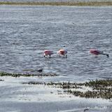 04-06-12 Myaka River State Park - IMGP9922.JPG