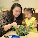 In Parent & Child Toddler classes LePort's experienced Montessori guides carefully show children how to do real activities, such as caring for plants.