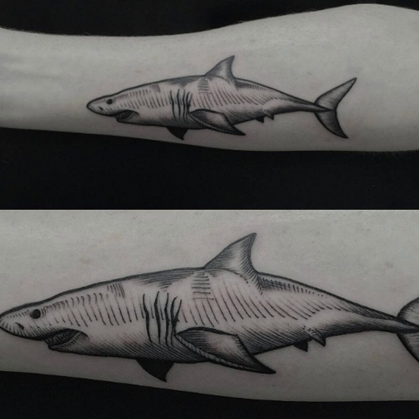este_magnfico_auto-croquis_tatuagem_de_tubaro