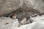 BUZZER   1/2 seconde de pause avant de disparaitre entre les rochers