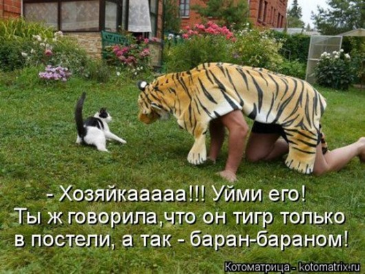 1489789894_svezhaya-kotomatrica-5