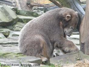 Photo: Knut forscht intensiv nach ;-)