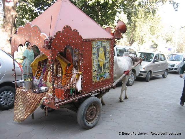 Une vache transporte un temple mobile, Delhi