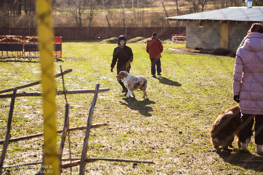 Тест на наличие пастушьего инстинкта - Страница 18 12-10-27-filonovaoawed-13-03-09-00