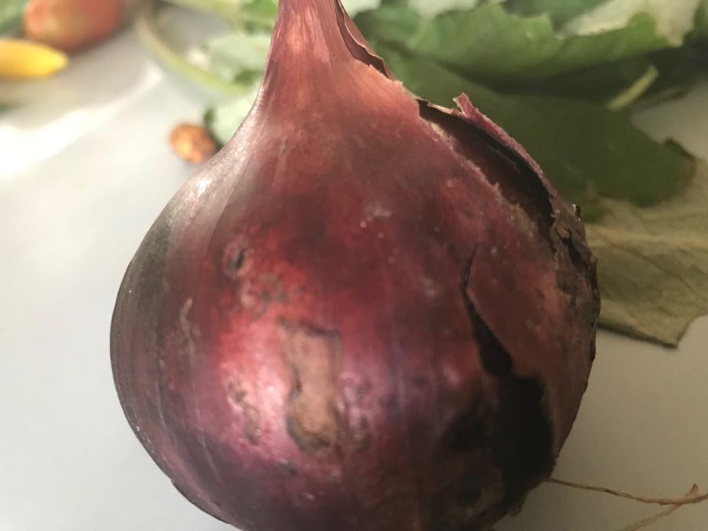 Vergeten groenten - IMG_8742.JPG