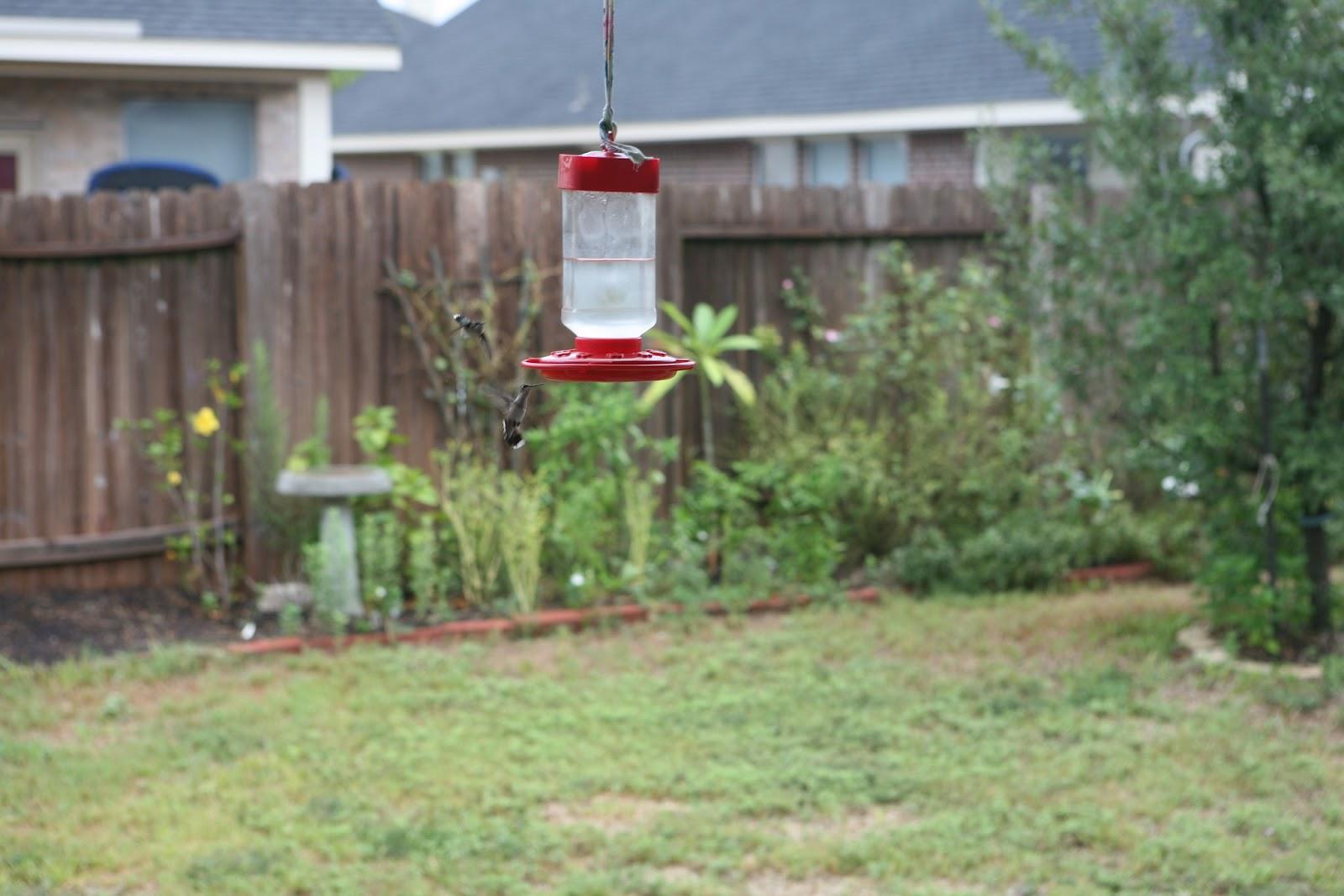 Gardening 2011 - IMG_3041.JPG