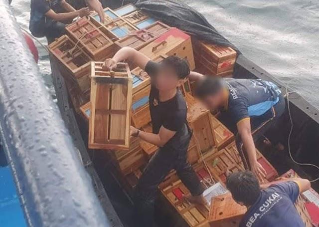 Bea Cukai Gagalkan Penyelundupan Ayam dan Kura-kura Asal Thailand di Perairan Tamiang