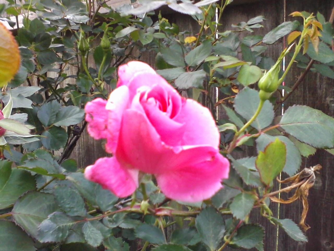Gardening 2014 - 0404190718.jpg