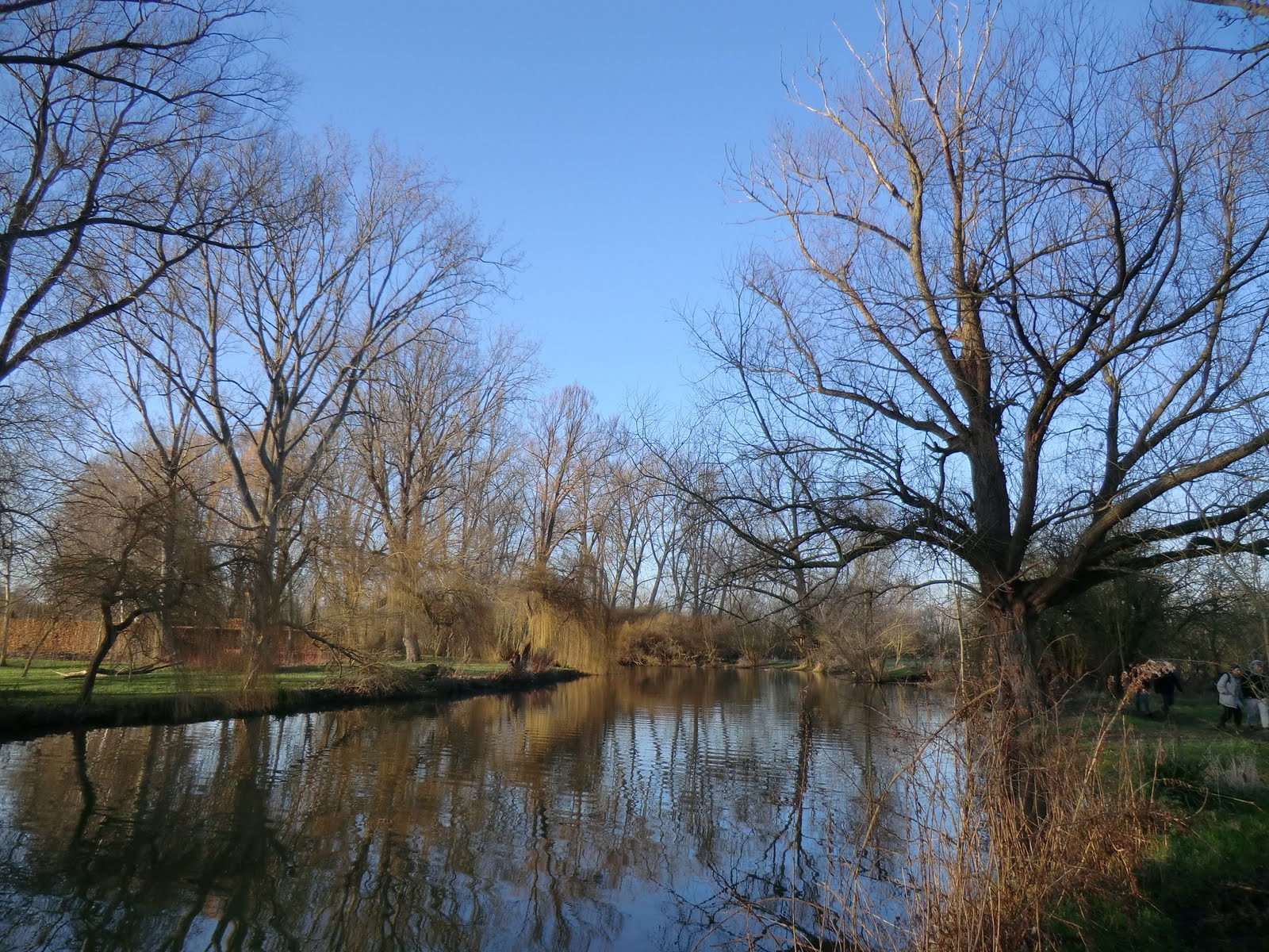 CIMG1521 River Cherwell near Lady Margaret Hall