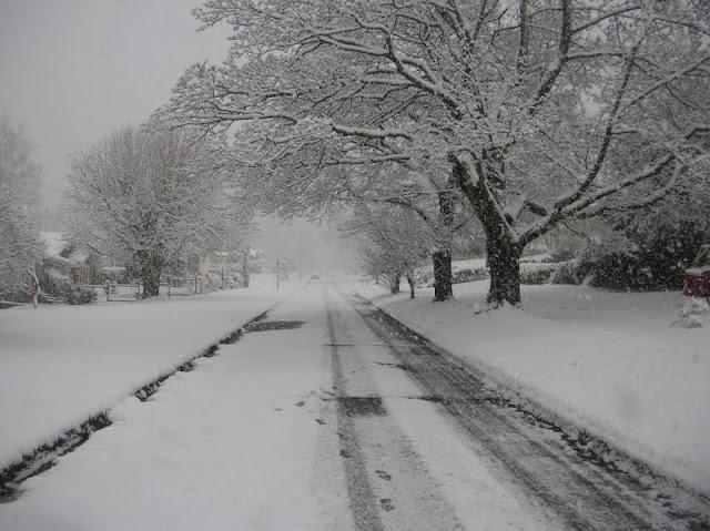 Trees line a snowy street / Credit: Jesse Kinsman