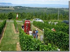 Luckett Vineyards, NS