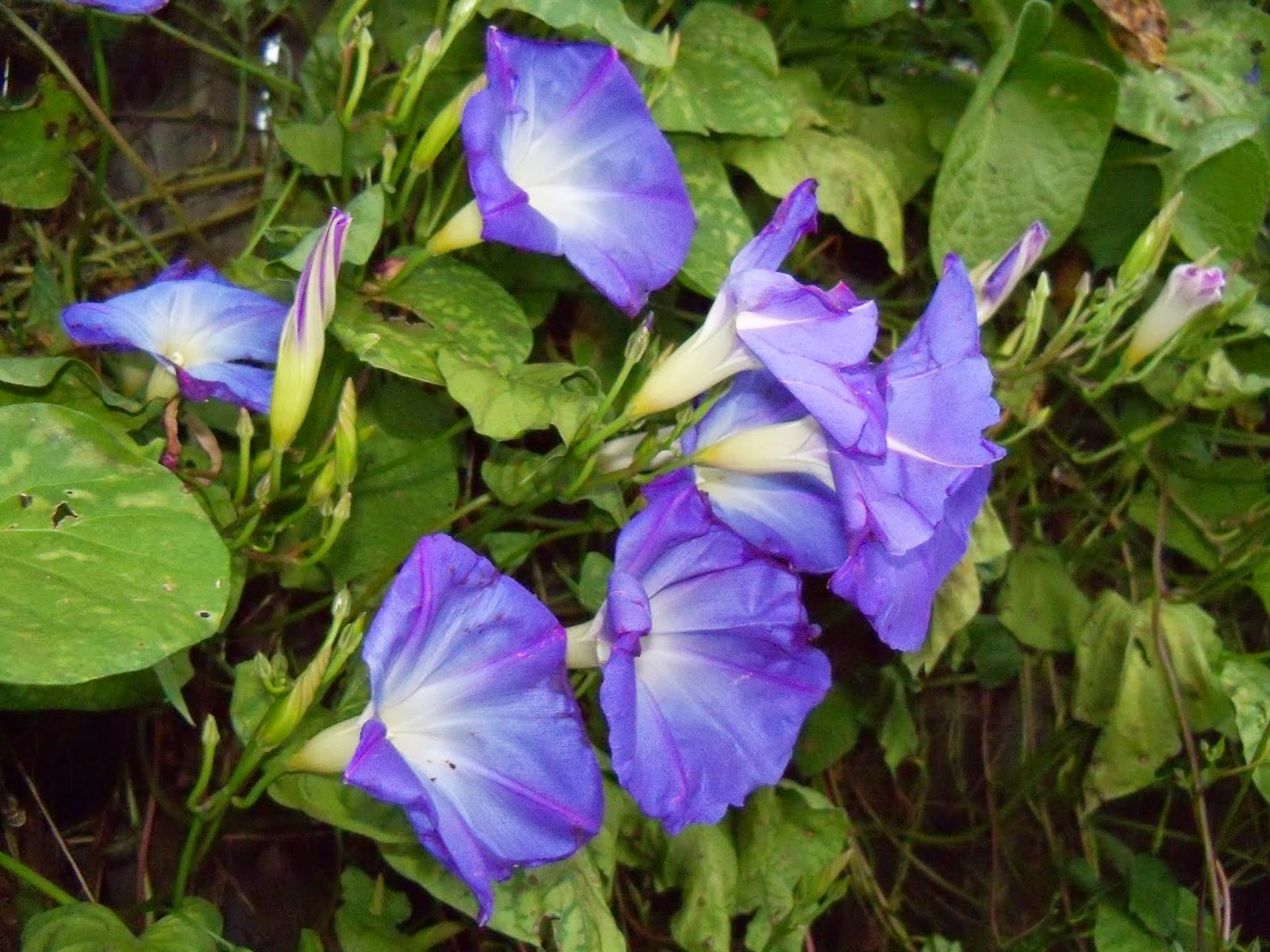 Gardening 2014 - 116_5270.JPG