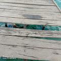 Jembatan Pulau Kambuno Rusak Parah,Ketua HIPMASIB Angkat Bicara