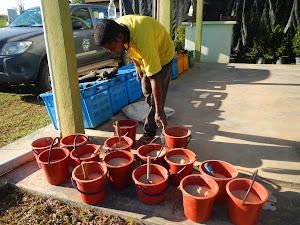Raja Musa Tree Planting 2013 (CmE)