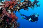 EG_Oasis_underwater.jpg