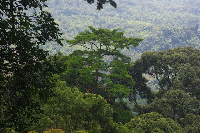 La forêt à Poring à 500 m d'altitude (Sabah, Malaisie), 31 juillet 2011. Photo : J.-M. Gayman