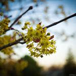 Spring (2 of 25).jpg